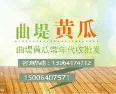 济南市济阳县曲堤黄瓜批发市场店铺图片