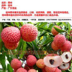 桂味荔枝供应产地代收代购经纪代办全国配送一件代发广东茂名电白产区