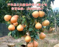 平和县正达蜜柚种苗有限公司店铺图片