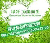 做绿叶需要哪些条件?淄博加入绿叶会员找谁办理?