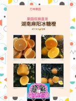 湖南麻阳冰糖橙