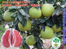 四川买红肉蜜柚苗的盆友可以看看,正宗的红心蜜柚苗