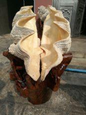 海捞砗磲工艺品批发,原产地直销,一手货源
