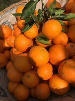 进口水果批发一手货源,普及一下*惠价格在哪里