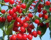 全国水果批发市场价格,揭秘一手货源在哪里