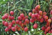 凌海有水果批发吗,揭秘一手货源在哪里