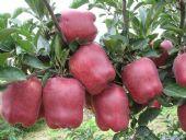 微商货源新鲜水果哪里找,揭秘一手货源价格多少钱