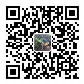奢侈品男鞋诚招代理,一件代发微信:as83152769图片