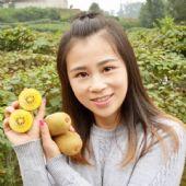 四川黄心猕猴桃新鲜孕妇水果5斤大果奇异果批发包邮非红心弥猴桃